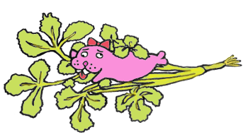 【パクチー栽培記録】家庭菜園の初心者がパクチーを種から育ててみるよ☆パクチーの育て方☆