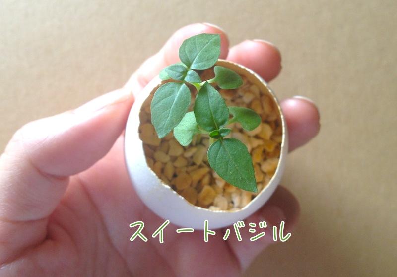 卵の殻でバジル栽培