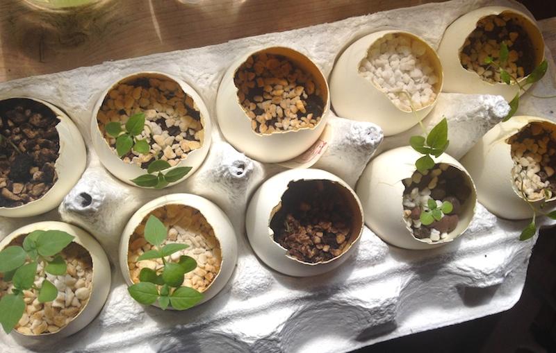 卵の殻で植物栽培