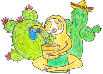 【サボテン栽培】種から育てるサボテン栽培キットに挑戦!