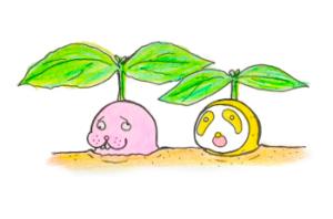 【タイバジル栽培記録】ガパオとホラパーを育ててタイ料理を作るぞ!