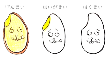 【胚芽米】発芽玄米みたいに胚芽米も発芽するのか実験